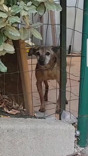 Août 2019 : Bouli enfermé depuis 1 an et demi sur cette petite terrasse