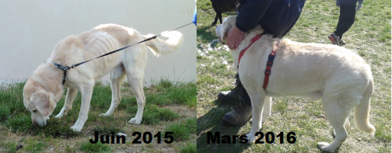Balou Mars 2016
