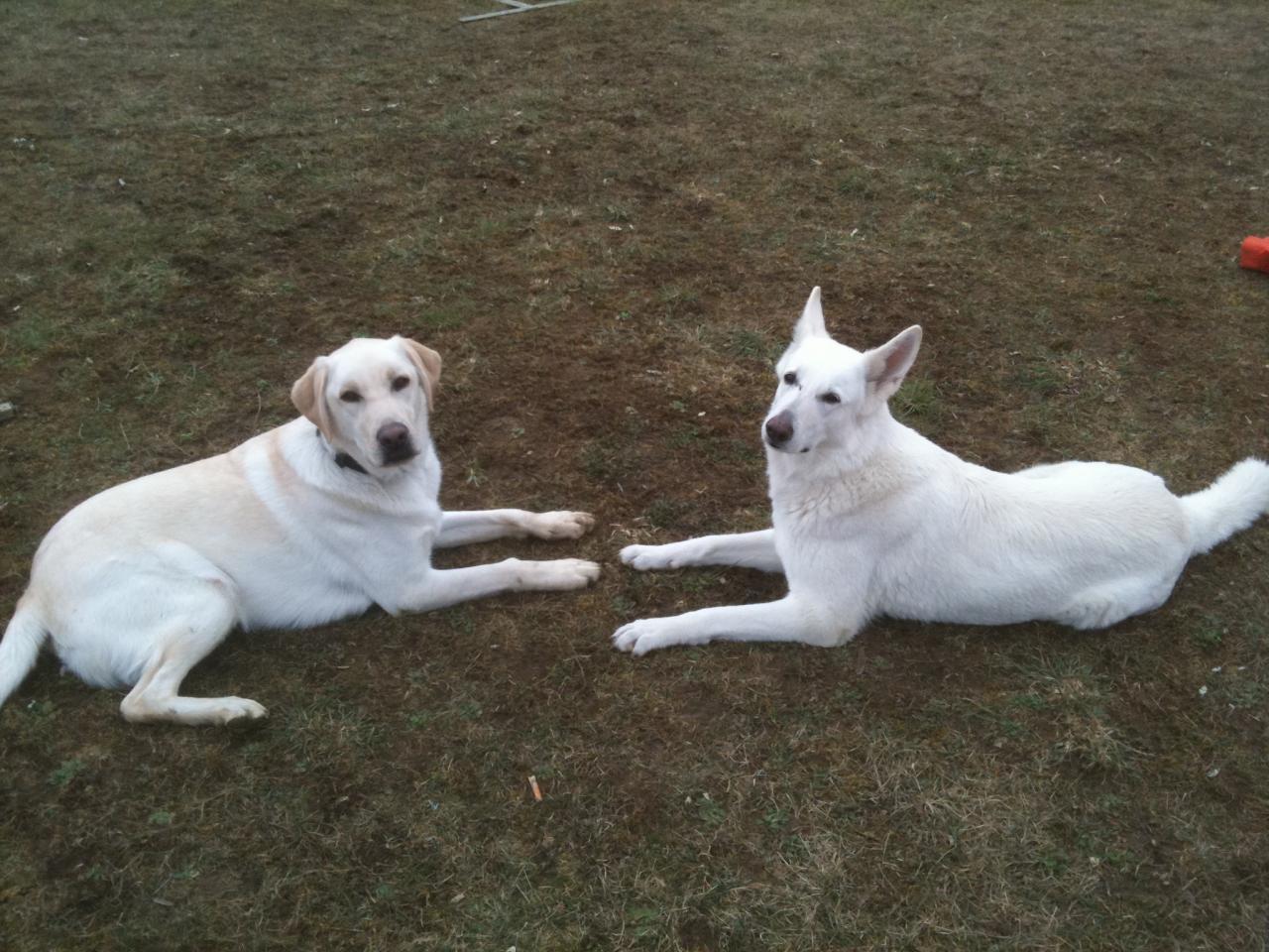 Dexter et Saxo