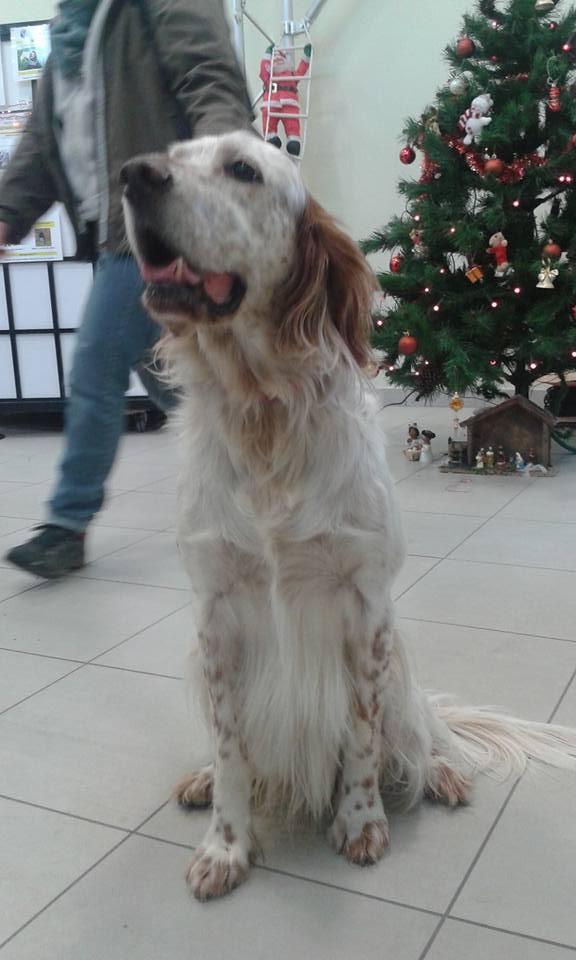 Décembre 2015 - Miko à notre marché de Noël