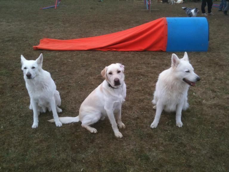Saxo, Dexter et Apache