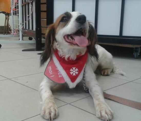Décembre 2015 - Tina à notre marché de Noël