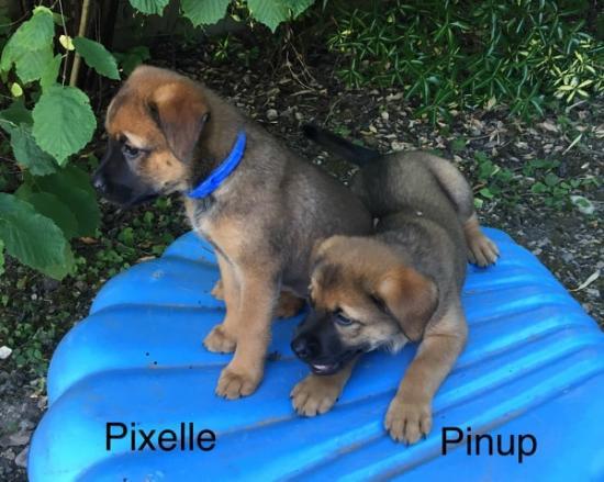 Pixelle et Pinup