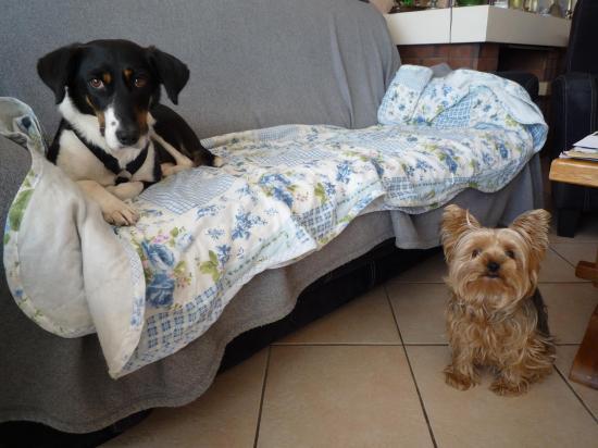 Cara avec Duchesse dans sa nouvelle famille